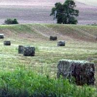 autiful Farm Land
